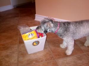 Doggie treat organization